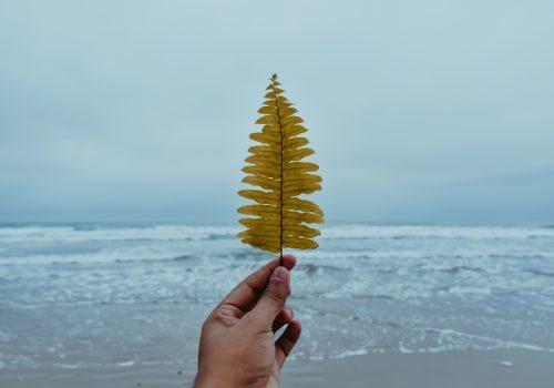beach-beach-front-blue-ocean-2078450